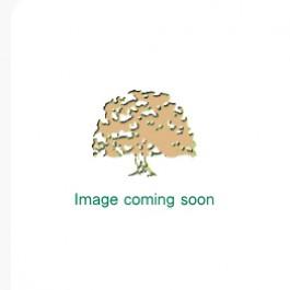 Rustic Oak Full Stave Worktop 2.5m x 720mm x 38mm